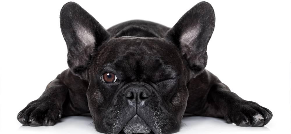 Muerte de un cachorro de 10 meses durante un vuelo genera indignación