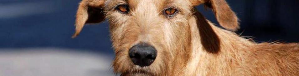 Diez datos esenciales que debe saber sobre la salud de su perro