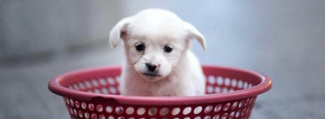 ¿Qué perro o cachorro es adecuado para ti?