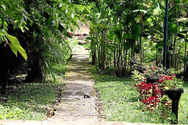 La cdmb har seminario sobre silvicultura urbana for Caracteristicas de un jardin botanico