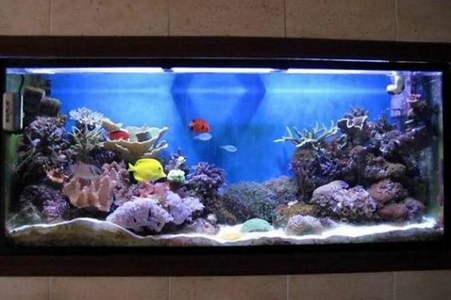 Quiero un acuario - Acuario en casa ...