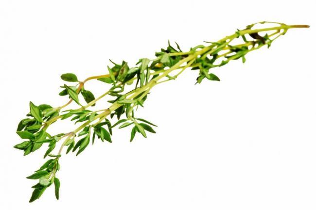 dentro de las nuevas tendencias de decoagro se imponen los cultivos hidropnicos es decir siembras de plantas y vegetales sin emplear el suelo