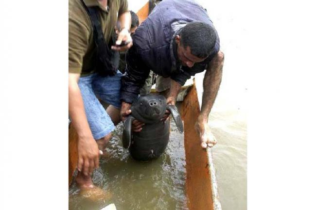 Resultado de imagen para Alerta ambiental por muerte de manatíes en ciénagas de Barrancabermeja