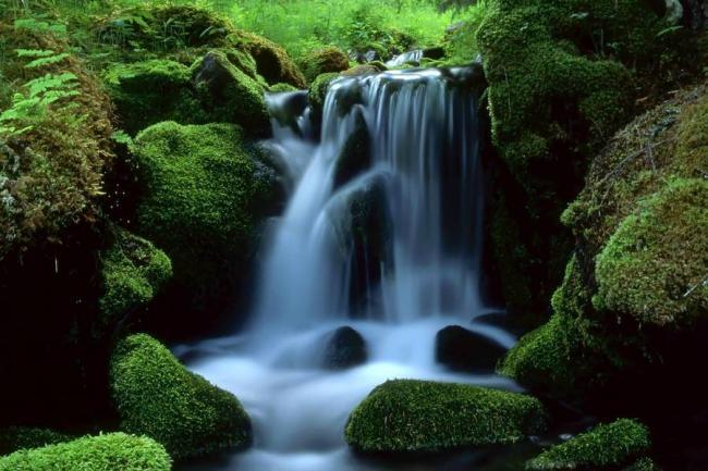Fuentes h dricas un recurso para reforestar y conservar for Tipos de vanguardias