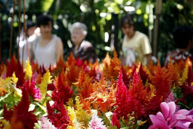 Exposici n de orqu deas en floridablanca floridablanca for Actividad de perros en el jardin botanico de caguas
