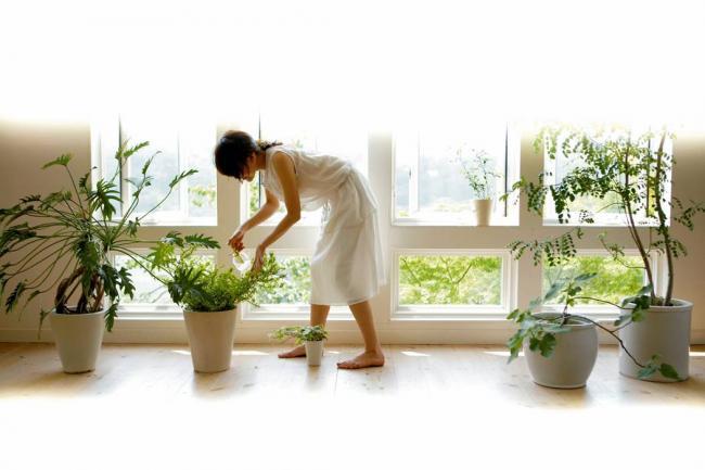 Planta en el ba o feng shui for Plantas para tener en casa segun el feng shui