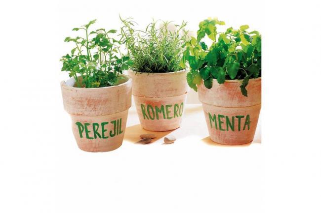 Plantas medicinales para cultivar en casa ola verde - Como tener un jardin en casa ...