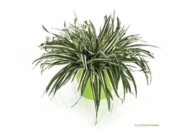 Plantas para tener en el hogar - Plantas para ahuyentar insectos ...