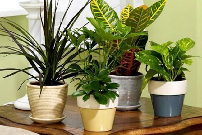 Plantas para tener en el hogar for Que significa plantas ornamentales