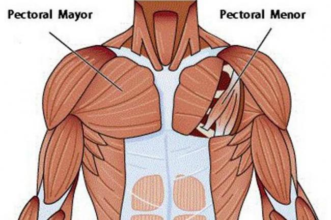Pérdida de masa muscular ahora se presenta desde los 20 años | Salud ...