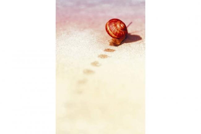Lo que el caracol nos enseña | Espiritualidad | Vanguardia.com