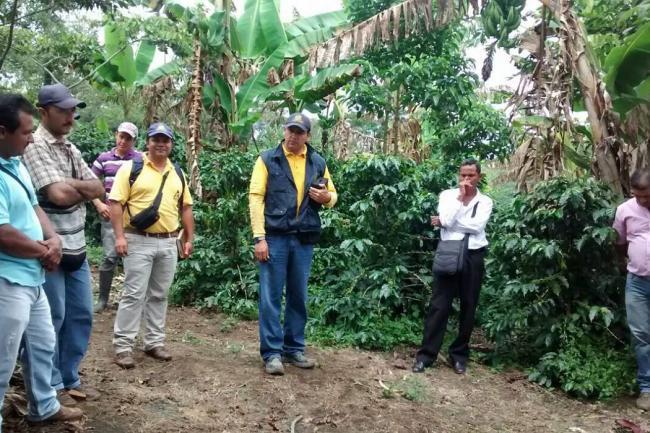 Caficultores de confines se prepararn para la cosecha for En cuanto tiempo se cosecha la tilapia