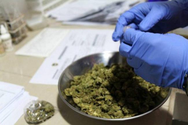 Conocé los milagros terapéuticos de la marihuana