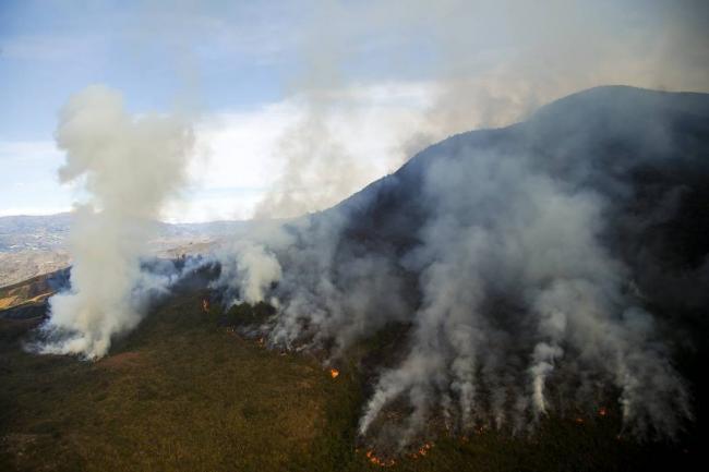 Incendios han consumido 12.000 hectáreas de bosques en Colombia