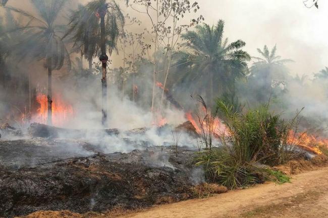 un_incendio_en_puerto_wilches_ha_arrasado_600_hectareas_de_bosque.jpg
