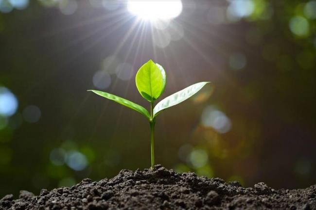Good Plants For Kids To Grow