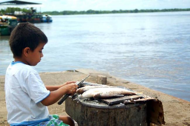 Mitad de los ecosistemas de Colombia está en riesgo — WWF