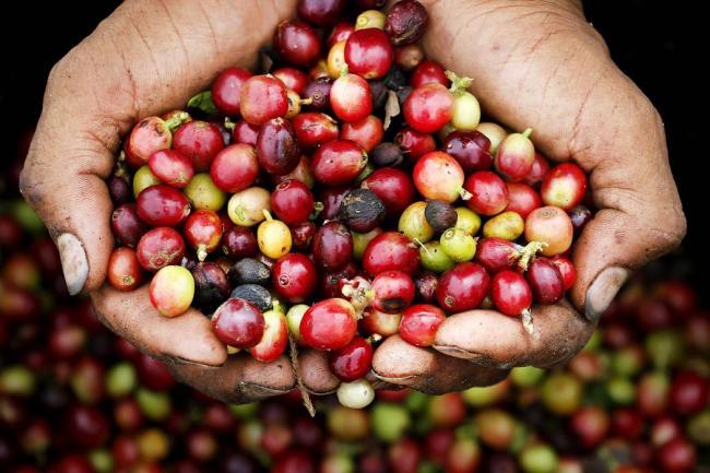 Exportación de café colombiano creció un 2 % en 2017