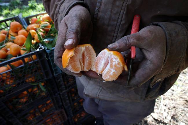 Material para siembra de c tricos debe adquirirse en for Viveros forestales en colombia