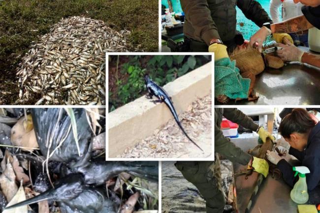 Investigan a Ecopetrol por derrame de crudo en Colombia