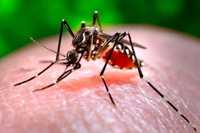 Detectaron dos casos de zika en Salta