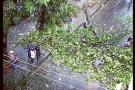Este es el árbol caído por la fuerte lluvia en la calle 36 con carrera 19.