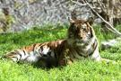 Zoológico de Miami cierra ante temor de escape de animales por inundación