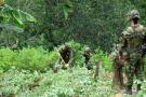 Cultivos ilícitos en Colombia aumentaron en un 39 %