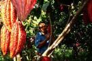 En busca del predio  del Parque del Cacao