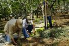 Girón no tiene programa de siembra de árboles