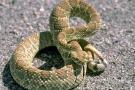 Murió en hospital de Bucaramanga niño mordido por una serpiente