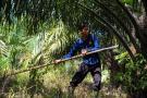 En Santander se construirá el primer complejo agroindustrial palmicultor
