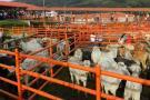 Levantan la cuarentena  a municipios de Arauca