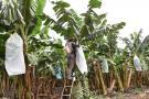 Seguro de agro tendrá 7% más que en 2016