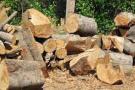 Preocupa impacto  de la deforestación