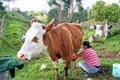 Productores de leche siguen preocupados por el bajo costo del producto