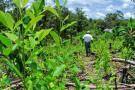 Preocupación por el incremento de cultivos ilícitos en Colombia