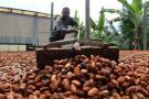 Colombia sólo llegó a final en mundial de cacao