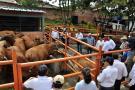 Guadalupe se sumó a programa de repoblamiento bovino