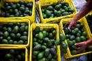 A 64 mercados externos llega  Colombia con 95 productos del agro