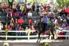Festival equino en las  ferias de Guadalupe