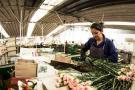 Los estadounidenses celebrarán San Valentín con 74% flores colombianas