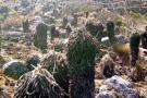 Plagas atacan frailejones de los páramos en Colombia