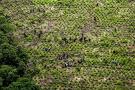Seis erradicadores de coca resultaron heridos tras caer en campo minado en Guaviare