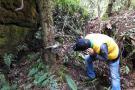 CAS adelanta conservación de recurso forestal de roble