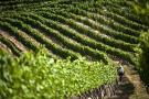 Santander agrícola debe adentrarse en la economía naranja: Sias