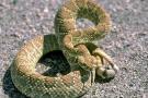 Suben casos de mordedura de serpiente en Santander
