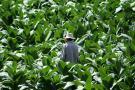 Siguen beneficios para los campesinos productores