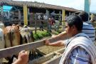 El municipio vivirá el primer Festival Equino y Bovino