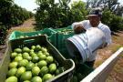 Colombia, atrasado en la producción de orgánicos